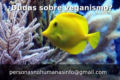 personasnohumanasinfo@gmail.com