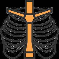 Thorax (rongga dada)