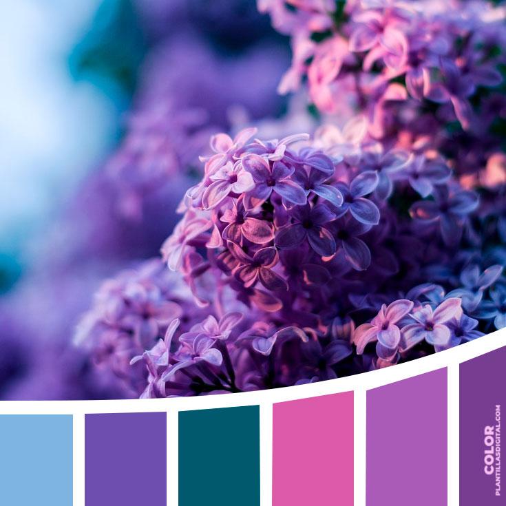 color_421