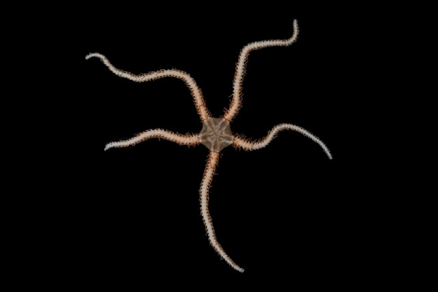Research reveals new species are evolving fastest in Antarctica