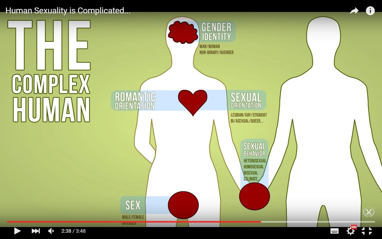 female male human sex