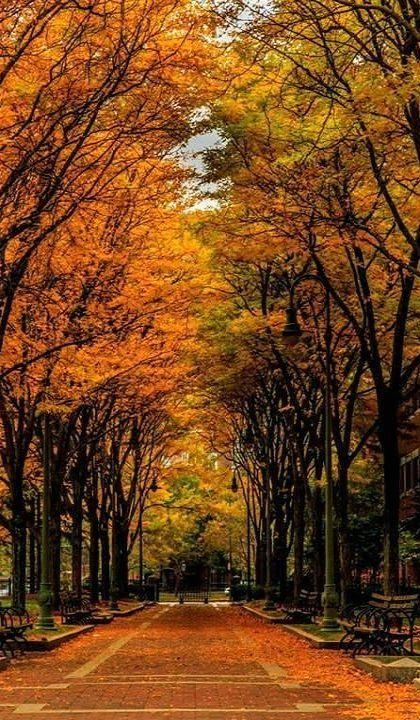 Fall in Boston, Massachusetts, USA