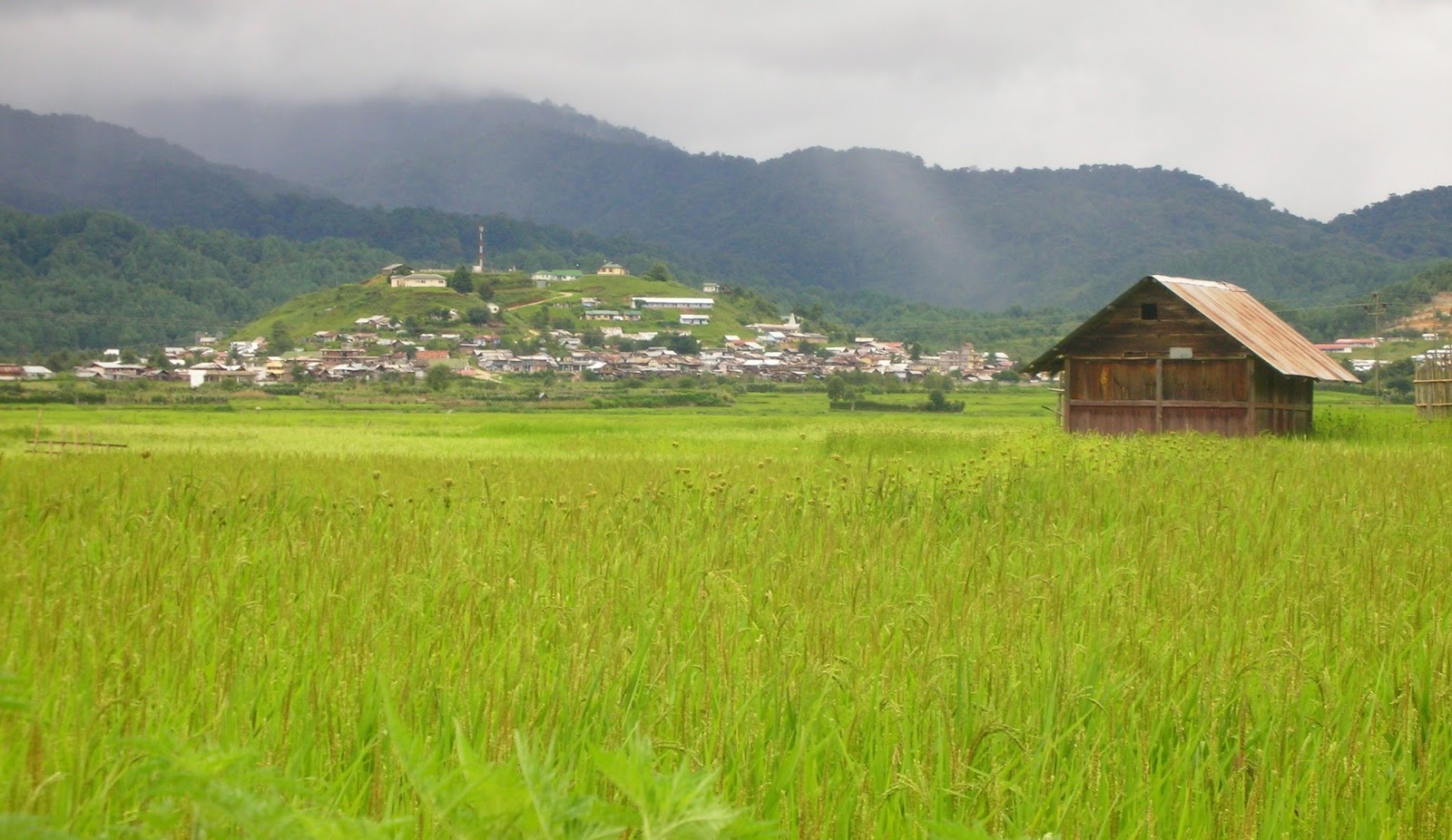Green Field of Ziro Valley