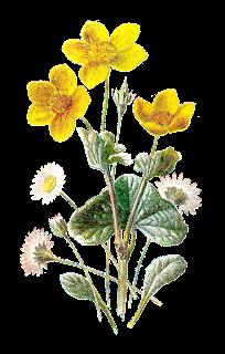 flower wildflower image botanical image