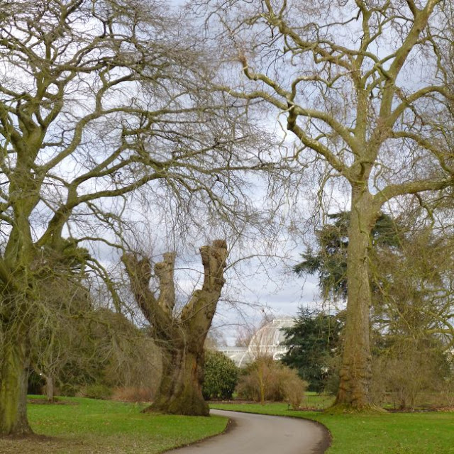 The path to the Palm House at Kew Gardens, January