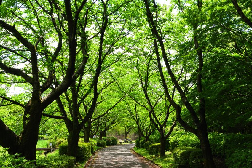 新緑の頃の犀川緑地の写真