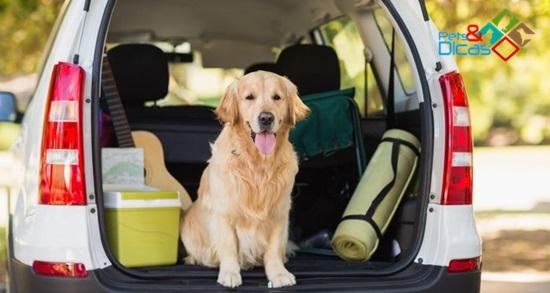 Regras de trânsito para o transporte de cães no carro