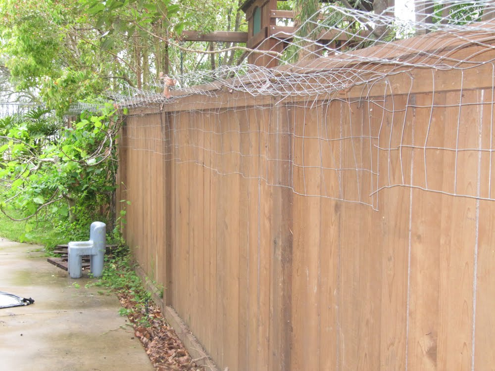 This Is Beige: Kittytown, Or Do It Yourself Cat Fencing