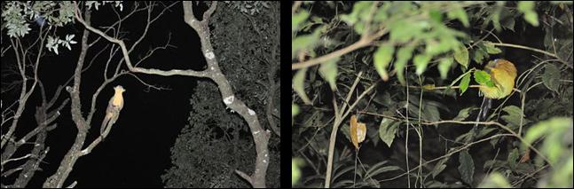 Kincayu y Tucancillo en Tour Nocturno de Monteverde, Costa Rica entre la mucha fauna que se puede observar de noche