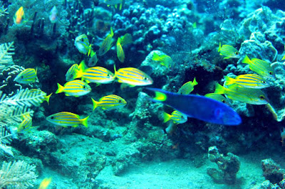 Pengertian Ekosistem Laut , Terumbu Karang dan Zona Perlindungannya
