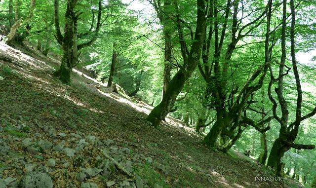 Hayedo de Luiña - Sierra de Las Aves - Asturias