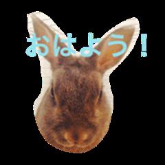 my healing rabbit super version