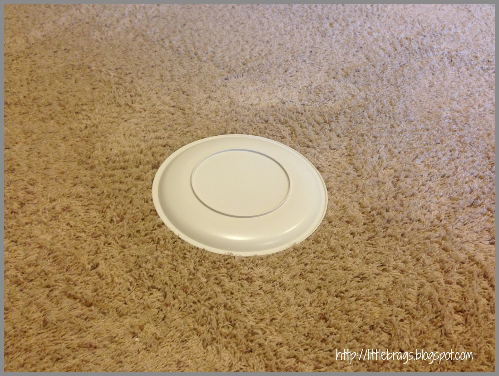 Little Brags: How To Get Rid Of Pet Stains On Carpet