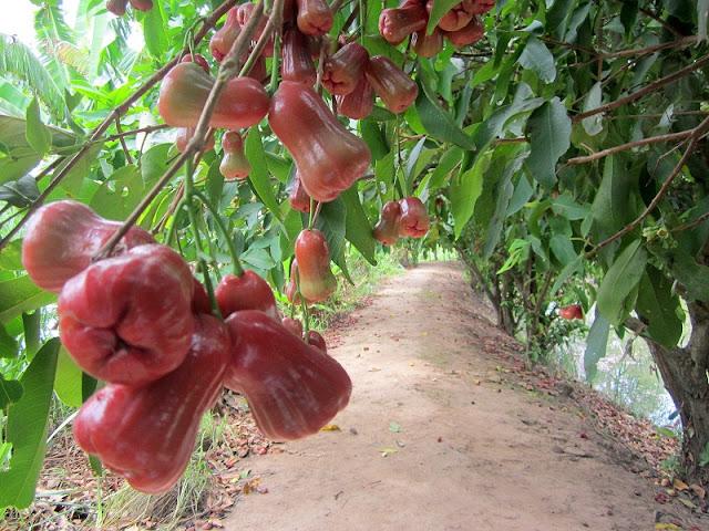 Garden tourism in Long Khanh-DongNai 2