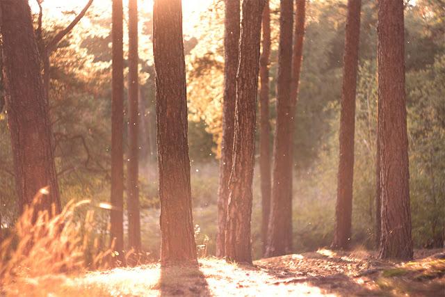 sie robi, jesien w lesie, autumn, herfst
