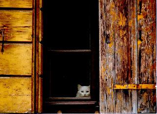 gatto bianco alla finestra
