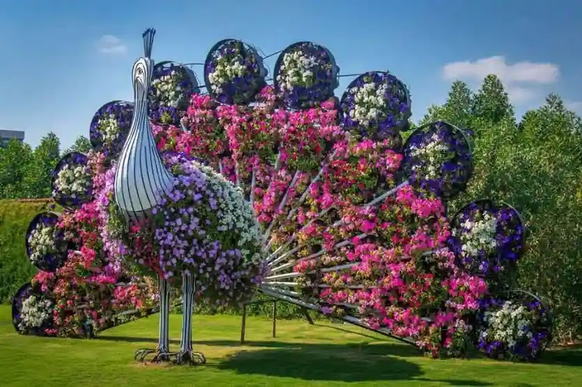 الطاوس حديقة الزهور في دبي
