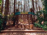 Lokasi dan Tiket Masuk Hutan Pinus Mangunan yogyakarta