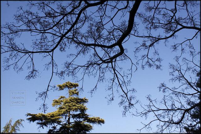 fotografía, árboles, Valencia, ramas, naturaleza