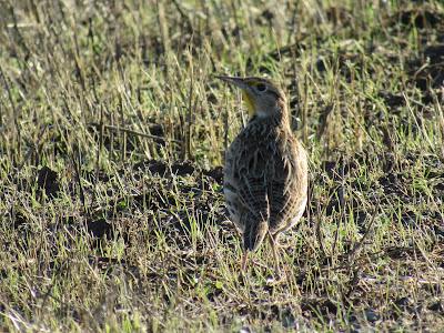 Llano Seco WMA California
