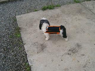 doenças do disco vertebral em cães