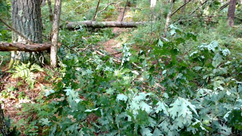 tree down across trail