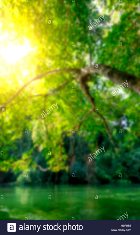 Picsart Background Hd Nature Blur