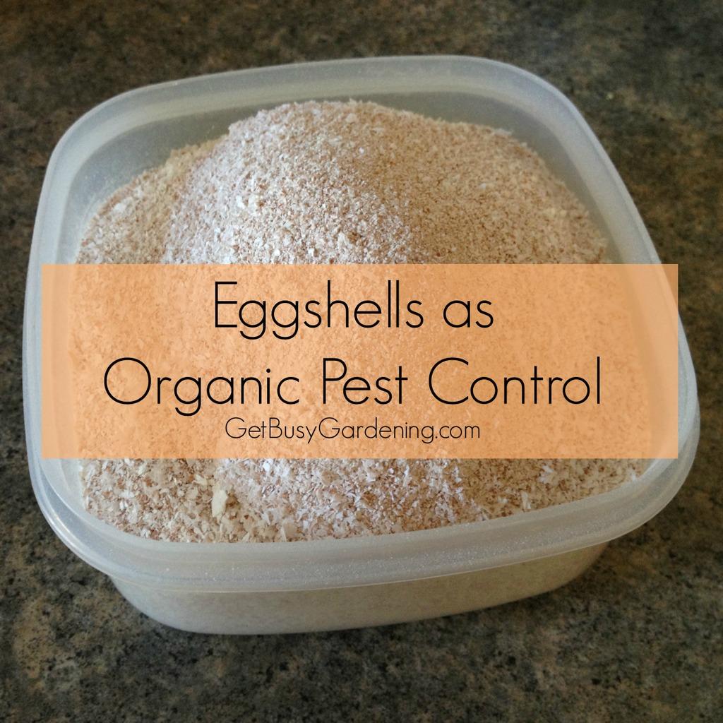 Everything WS: Eggshells As Organic Pest Control