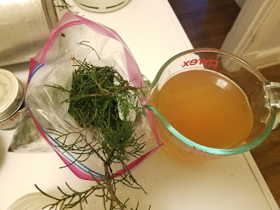 Eastern Red Cedar tea.