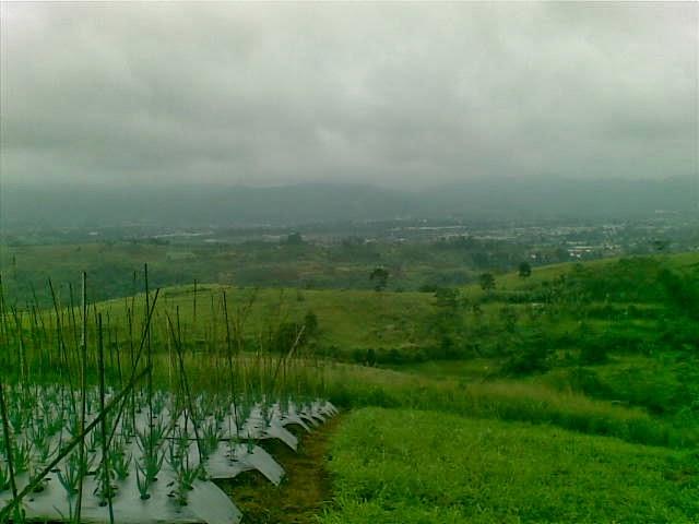 Foto(5198) Jual Tanah Milik Luas 12 Ha, Lokasi puncak Jual tanah di cipanas jual tanah di puncak