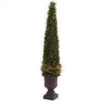 MIXED GOLDEN BOXWOOD & HOLLY TOPIARY W/URN #5368