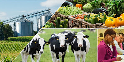 Agribusiness Manager Job Search