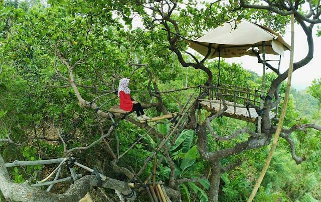 Rumah-Pohon-Goa-Cocor-Buayan-Kebumen