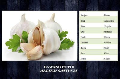 manfaat dan kandungan senyawa serta vitamin dan mineral pada bawang putih