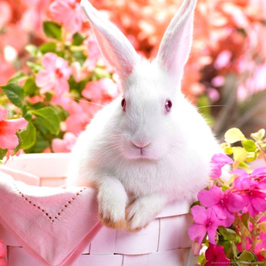 White Rabbit Wallpaper Safari Wallpapers