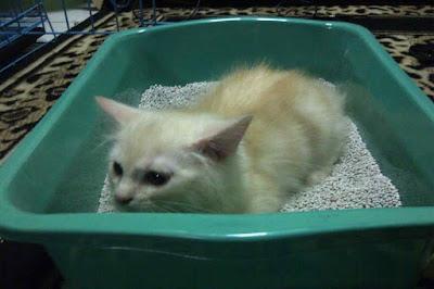 pasir zeolit untuk kucing