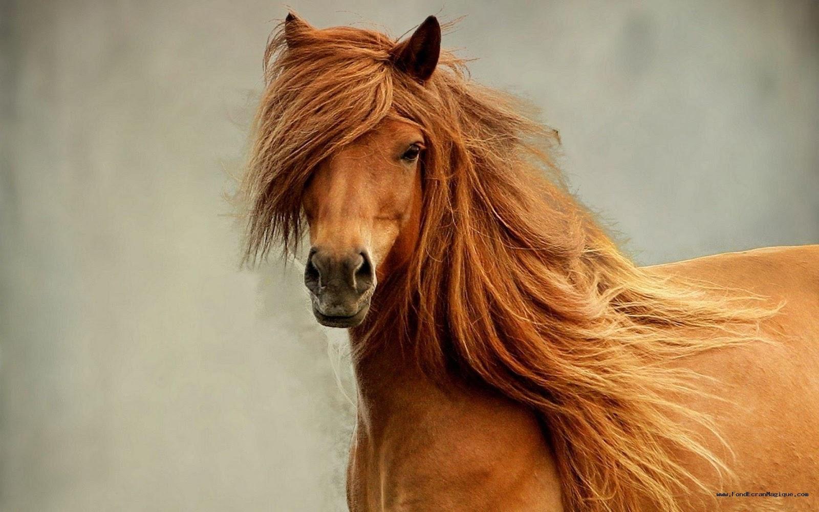 fonds dcran cheval gratuit - Cheval Gratuit