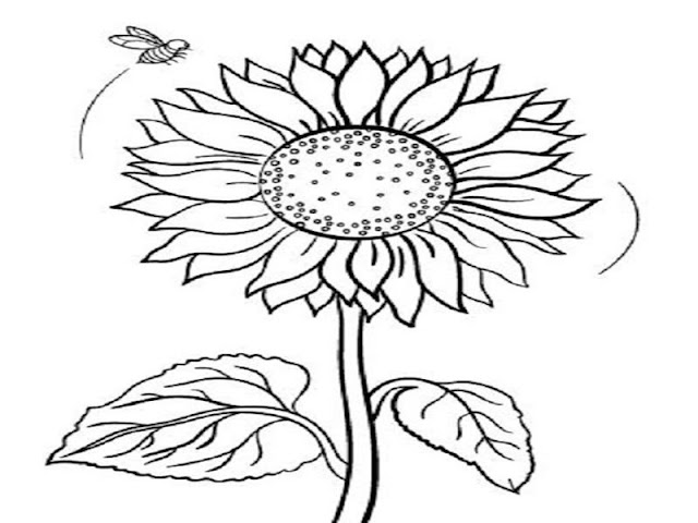 Contoh Gambar Mewarnai Bunga Matahari Gambar Mewarnai Bunga