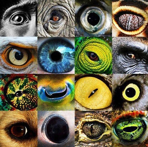 Animals eyes collection - Eyes of Nature - Incredibly Close-up Animal Cornea