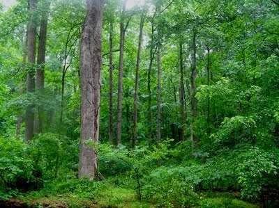 Berbagai Jenis tumbuhan di Hutan Heterogen
