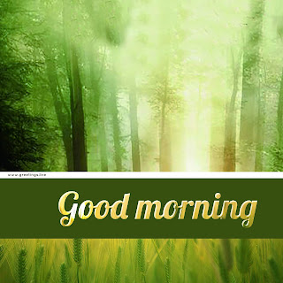 Fresh morning wishes with good green forest light effect.jpg
