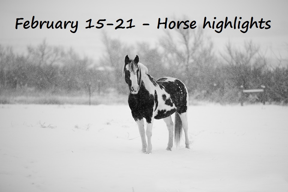 Mane Dates Horsing Around In The Upper Midwest February