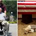 Ο ΜΠΟΥΣ ΚΑΙ Ο SULLY! Η ιστορία του σκύλου που ήταν στο πλευρό του μέχρι το τέλος...
