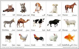 اسماء الحيوانات الاليفة بالانجليزى
