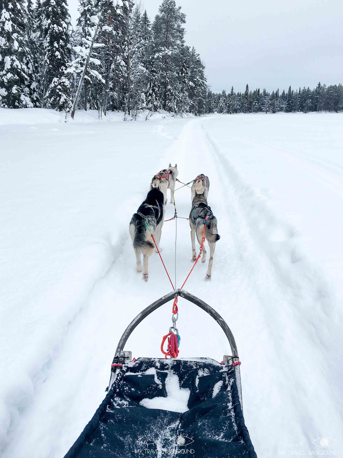 My Travel Background : Que faire à Rovaniemi en Laponie ? Chiens de traineau