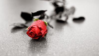 صور وخلفيات ورد أحمر رومانسى - موقع جزيرة خيال