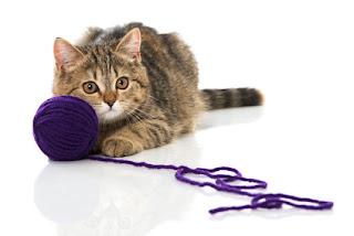 L'alimentazione nelle varie fasi di vita del gatto