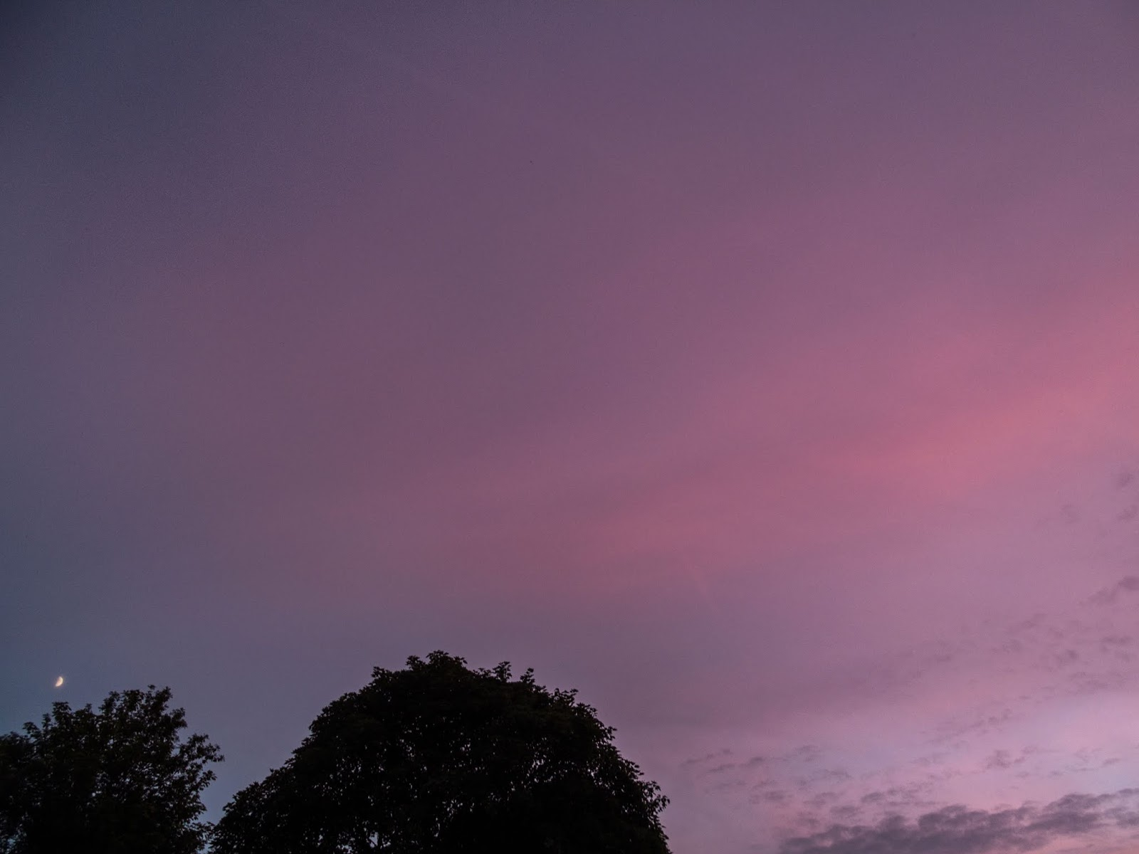 Moon rising over trees against a pink pastel sunset sky.