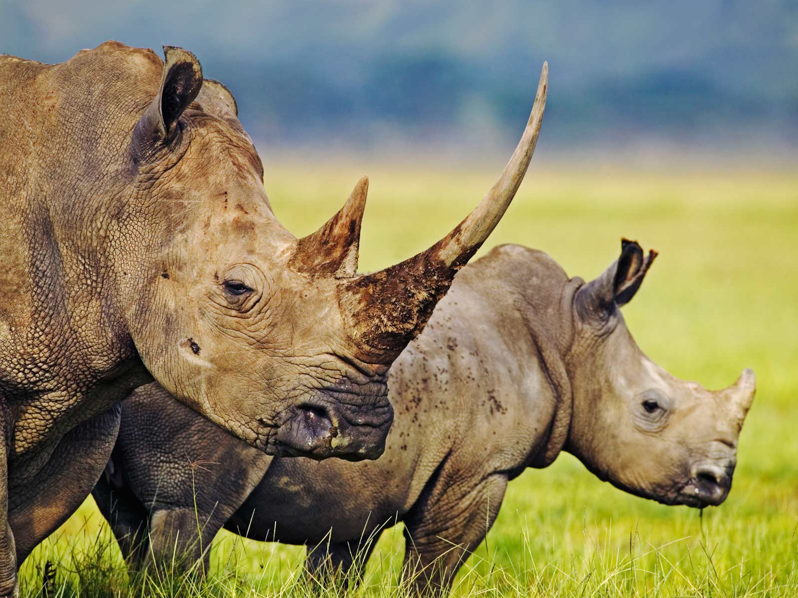 Rhino wallpapers | Animals Library