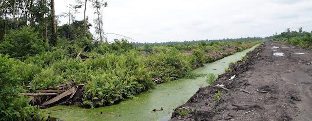 Standfest in die Zukunft | Palmölplantage Global2000